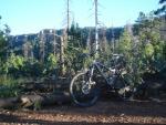Mogollon Rim 260 Trail